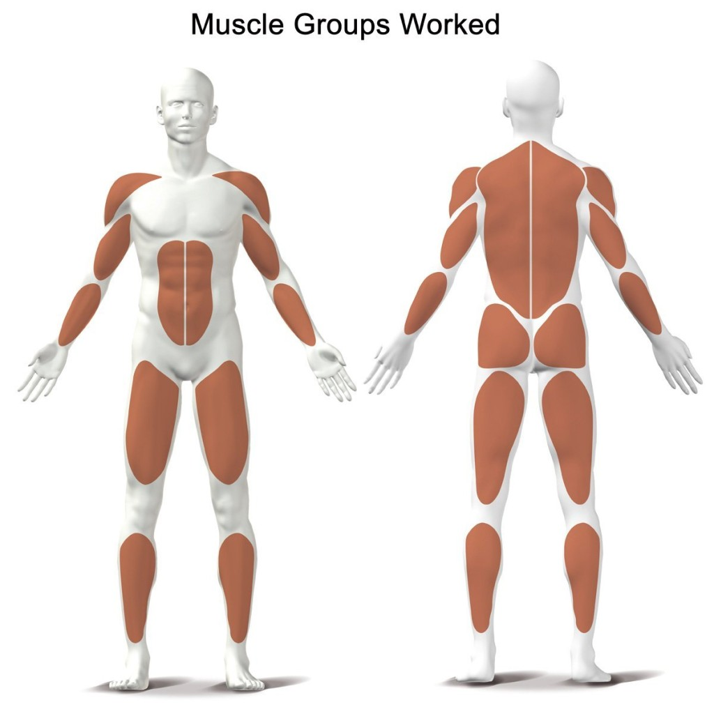 rowing machine muscle groups